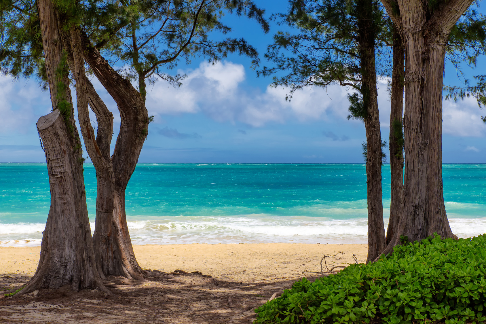 View of beatiful beach with turquoise water between two trees in Waimanalo, Oahu, Hawaii